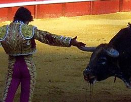 Bullfighter teasing a bull which is vomiting blood, (c)LACS